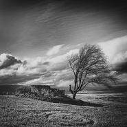ITALIA: Rural Lands - Biccari (FG)